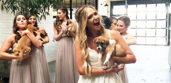אימוץ חיות במקום זרי פרחים בחתונה